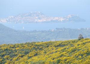 angelo_zisa_toscana_isola-di-elba