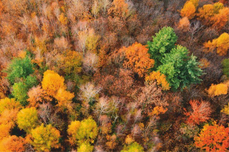 bello_franco_alberi_autunno