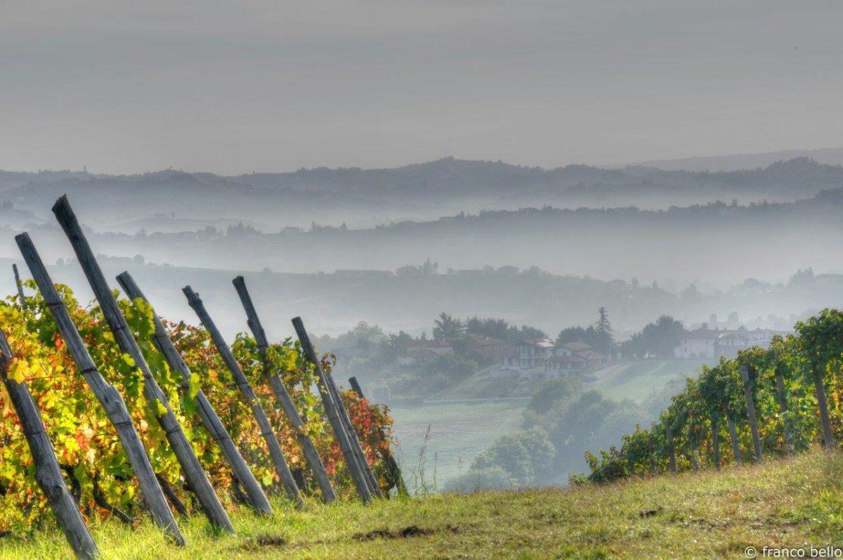 bello_franco_colline_nebbia_vigne