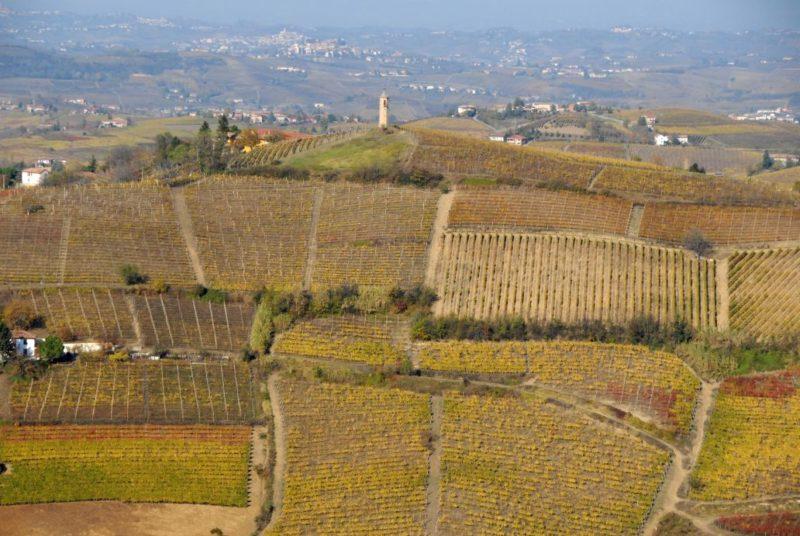 bello_franco_vigne_colline_torre_2
