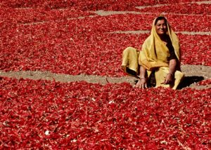 Sergio_Ardissone_Donna_tra_i_peperoncini_Rajasthan_India