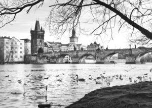 andrea_pesce_ponte_carlo_praga